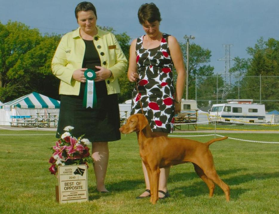 Best Opposite,  Woodstock  Pointing Breed Specialty 2010