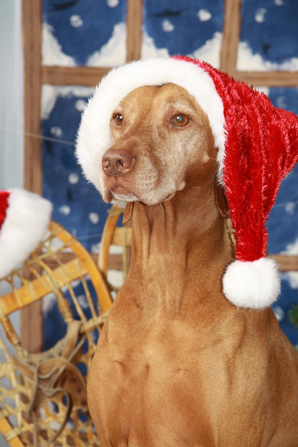 Joyeux Noel  2010 !!!