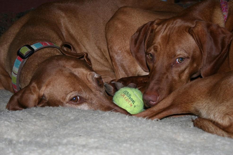 Charlie et Flash