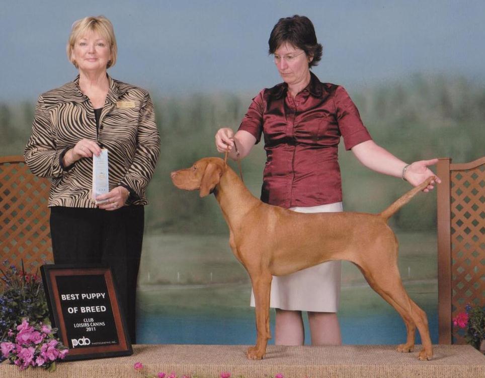 Charlie Best puppy in breed juin 2011