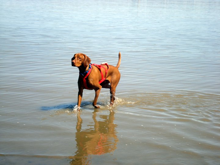 En cani-cross...à la pause rafraîchissement