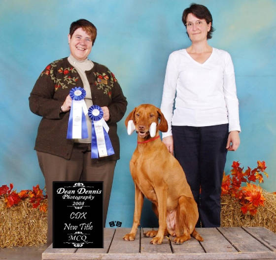 "Flash obtient son titre ""Companion Dog By Excellence"" CDX"