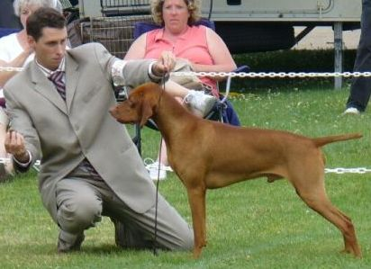 MBISS & MBIS AM/Can GCH Akar Malek By Faithful Miro BVC, FD, CDX