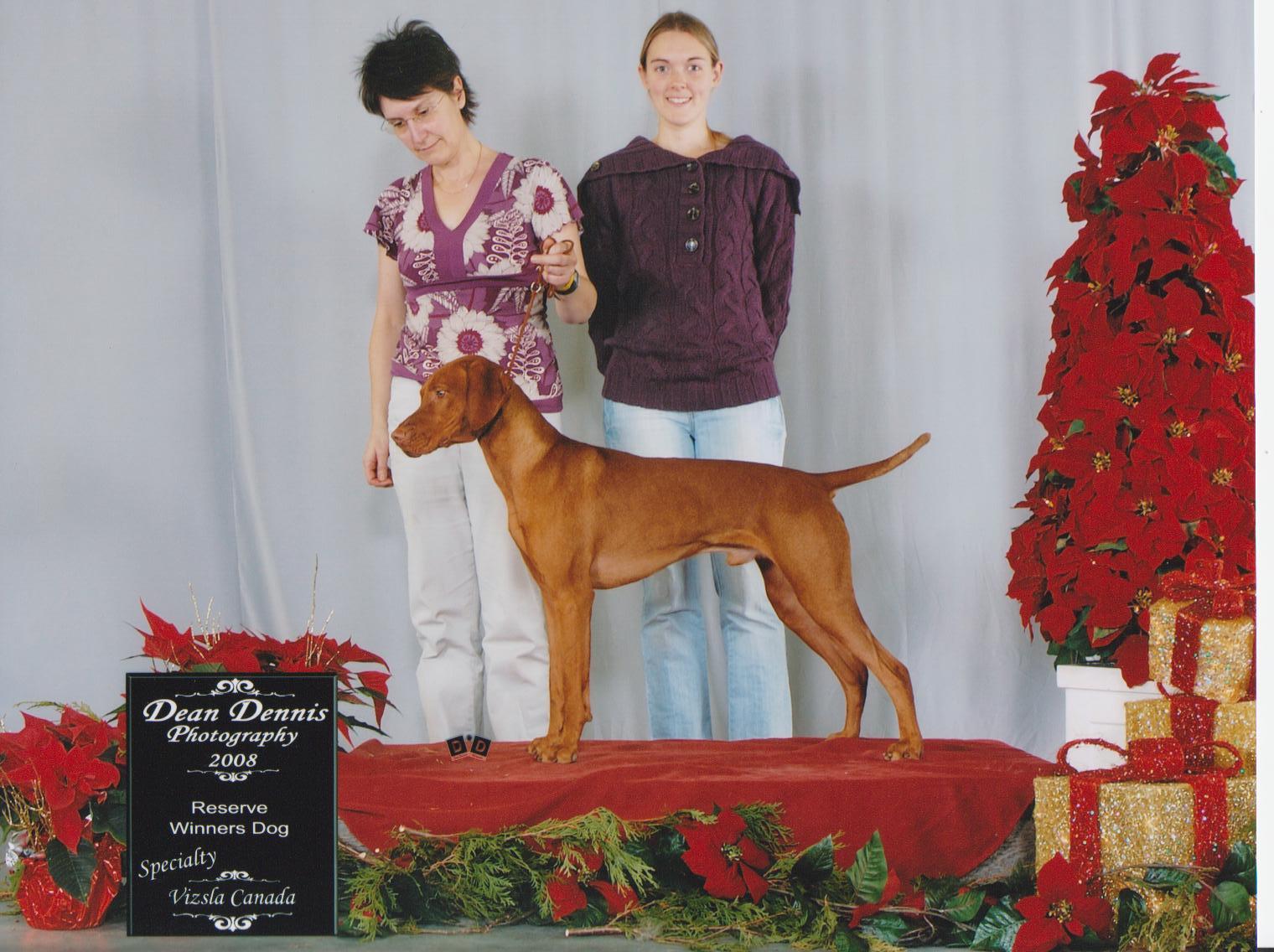 Réserve Winner dogs à la spécialité de vizsla en 2008